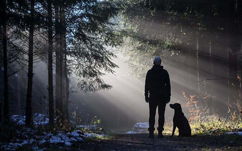 A person stands on a nature walk while a dog sits next to them. Only their silhouettes are visible. Many rays of light are beaming out from behind the tree they are gazing at.