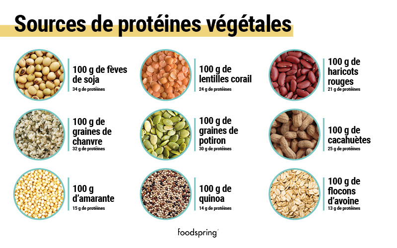 plant-protein-sources