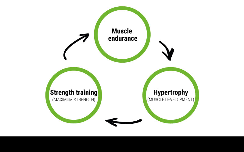 An infographic displaying a cycle of muscle endurance, hypertrophy, and strength training.