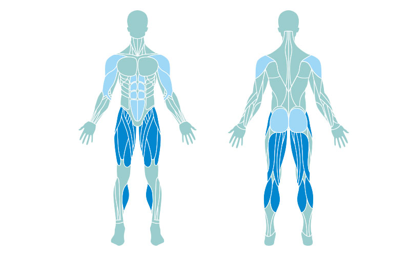 muscle map of the primary and secondary muscles worked during jumping jacks. The primary muscles are highlighted in dark blue; the secondary are in light blue.
